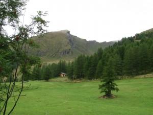 Almrausch-privat