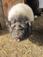 Schweinchen; privat