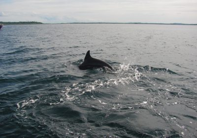 Delfin in Panama