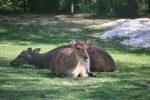 Damwild Zoo Linz