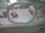 Cengduu-neugeborener Panda-privat