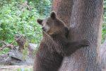 Bear Rescue Center